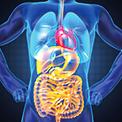 Icones-Digestive
